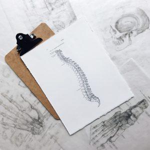 Spine Level 1